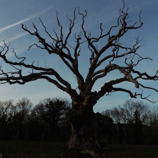 lightening-tree-2