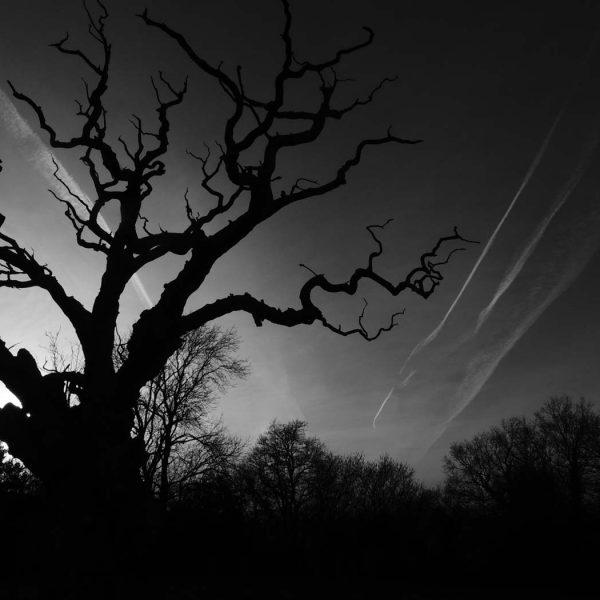 lightening-tree-4