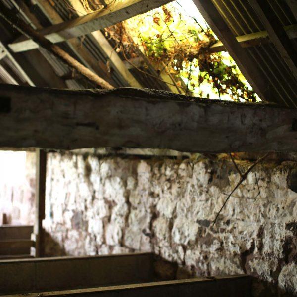 trealy-farm-lambing-shed