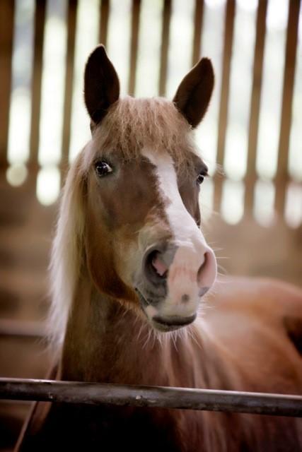 horse-charlie-3